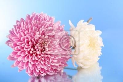Постер Астры Вайолет aster цветы на голубом фонеАстры<br>Постер на холсте или бумаге. Любого нужного вам размера. В раме или без. Подвес в комплекте. Трехслойная надежная упаковка. Доставим в любую точку России. Вам осталось только повесить картину на стену!<br>