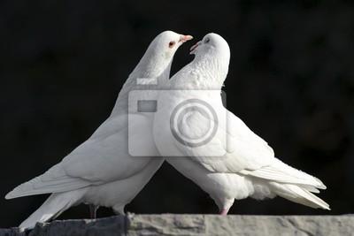 Два любящих белых голубей, 30x20 см, на бумагеГолуби<br>Постер на холсте или бумаге. Любого нужного вам размера. В раме или без. Подвес в комплекте. Трехслойная надежная упаковка. Доставим в любую точку России. Вам осталось только повесить картину на стену!<br>