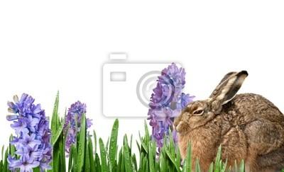 Постер Гиацинты Пасхальный кролик и весенние цветы изолированныеГиацинты<br>Постер на холсте или бумаге. Любого нужного вам размера. В раме или без. Подвес в комплекте. Трехслойная надежная упаковка. Доставим в любую точку России. Вам осталось только повесить картину на стену!<br>