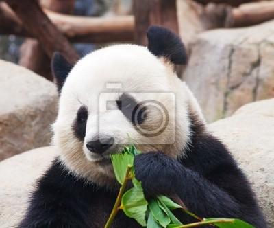 Постер Животные Медведь панда, 24x20 см, на бумагеПанда<br>Постер на холсте или бумаге. Любого нужного вам размера. В раме или без. Подвес в комплекте. Трехслойная надежная упаковка. Доставим в любую точку России. Вам осталось только повесить картину на стену!<br>