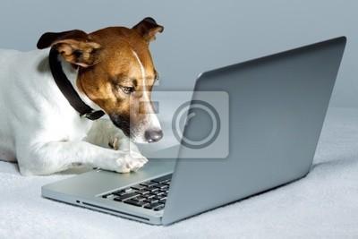 Собака, используя Ноутбук, 30x20 см, на бумагеСобаки<br>Постер на холсте или бумаге. Любого нужного вам размера. В раме или без. Подвес в комплекте. Трехслойная надежная упаковка. Доставим в любую точку России. Вам осталось только повесить картину на стену!<br>