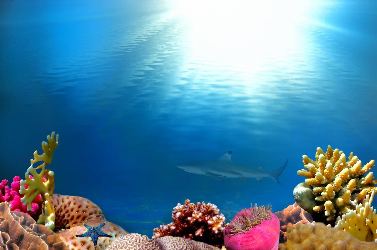 Постер Подводный мир Подводный сцены с солнечных лучей, 30x20 см, на бумагеАкулы<br>Постер на холсте или бумаге. Любого нужного вам размера. В раме или без. Подвес в комплекте. Трехслойная надежная упаковка. Доставим в любую точку России. Вам осталось только повесить картину на стену!<br>