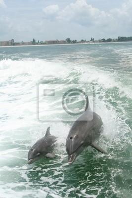 Дельфины играют, 20x30 см, на бумагеДельфины<br>Постер на холсте или бумаге. Любого нужного вам размера. В раме или без. Подвес в комплекте. Трехслойная надежная упаковка. Доставим в любую точку России. Вам осталось только повесить картину на стену!<br>
