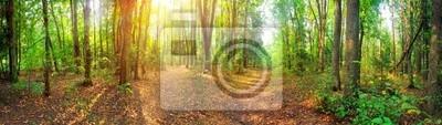"""Постер Русская природа """"Панорама на смешанном лесу на летний Солнечный день"""""""
