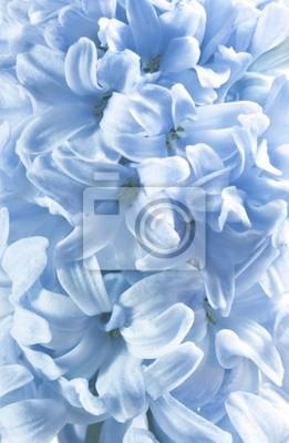 Постер Гиацинты Голубой гиацинт цветы, цветочные backgroungsГиацинты<br>Постер на холсте или бумаге. Любого нужного вам размера. В раме или без. Подвес в комплекте. Трехслойная надежная упаковка. Доставим в любую точку России. Вам осталось только повесить картину на стену!<br>