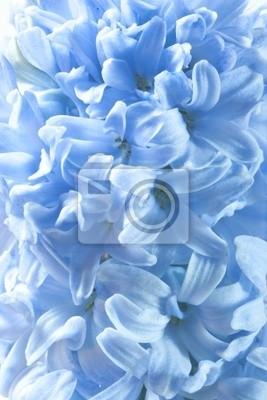 Постер Гиацинты Голубой гиацинт цветы, цветочные backgroungs.Гиацинты<br>Постер на холсте или бумаге. Любого нужного вам размера. В раме или без. Подвес в комплекте. Трехслойная надежная упаковка. Доставим в любую точку России. Вам осталось только повесить картину на стену!<br>