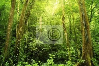 Постер Малайзия Тропический лесМалайзия<br>Постер на холсте или бумаге. Любого нужного вам размера. В раме или без. Подвес в комплекте. Трехслойная надежная упаковка. Доставим в любую точку России. Вам осталось только повесить картину на стену!<br>