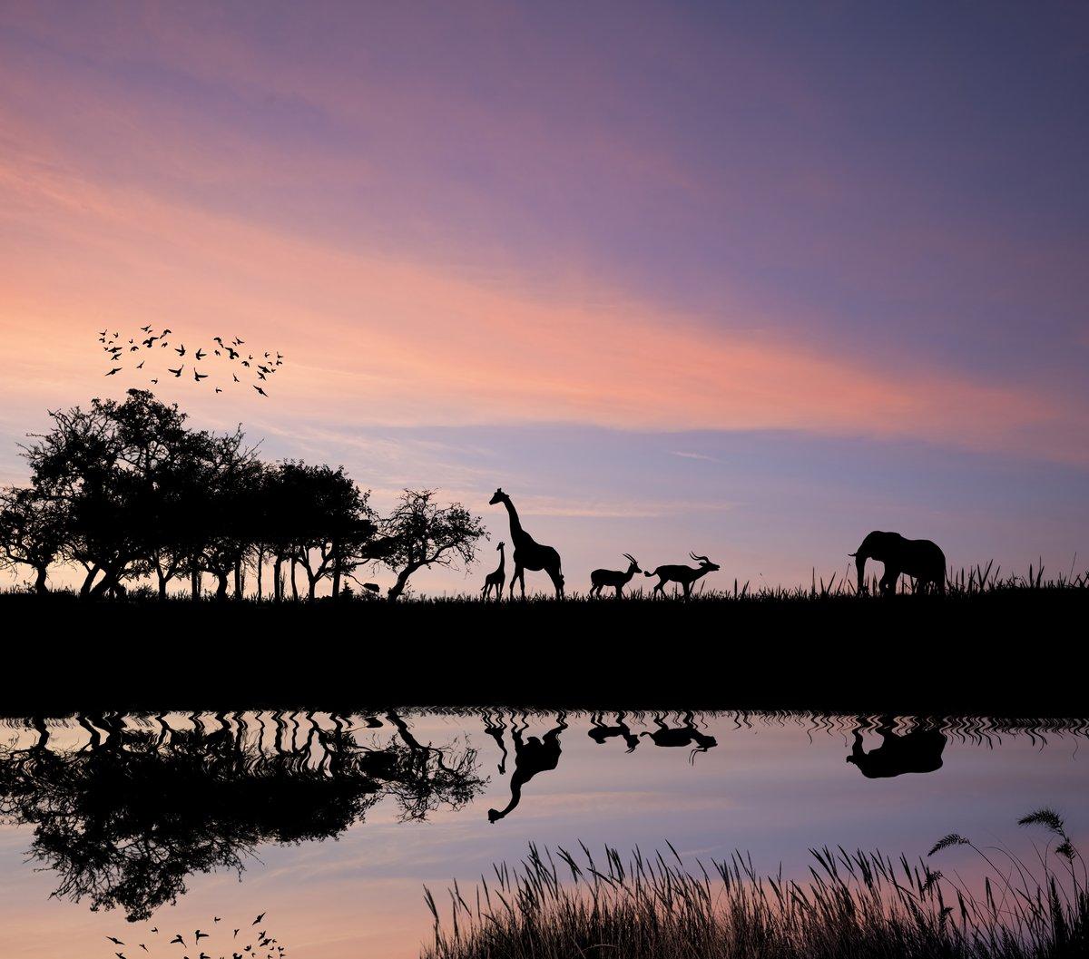 Постер Животные Сафари в Африке диких животных reflction в воде силуэт, 23x20 см, на бумагеСлоны<br>Постер на холсте или бумаге. Любого нужного вам размера. В раме или без. Подвес в комплекте. Трехслойная надежная упаковка. Доставим в любую точку России. Вам осталось только повесить картину на стену!<br>