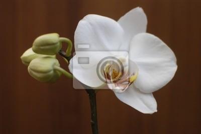 Постер Орхидеи Орхидея цветокОрхидеи<br>Постер на холсте или бумаге. Любого нужного вам размера. В раме или без. Подвес в комплекте. Трехслойная надежная упаковка. Доставим в любую точку России. Вам осталось только повесить картину на стену!<br>