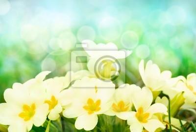 Постер Примула Свежие цветы примулы на солнечной полянеПримула<br>Постер на холсте или бумаге. Любого нужного вам размера. В раме или без. Подвес в комплекте. Трехслойная надежная упаковка. Доставим в любую точку России. Вам осталось только повесить картину на стену!<br>