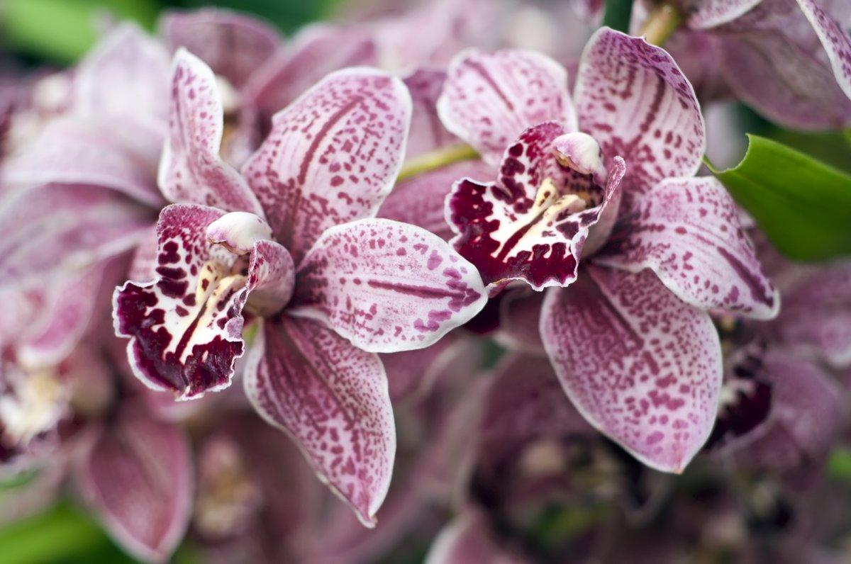 Постер Орхидеи Фон из сиреневых орхидейОрхидеи<br>Постер на холсте или бумаге. Любого нужного вам размера. В раме или без. Подвес в комплекте. Трехслойная надежная упаковка. Доставим в любую точку России. Вам осталось только повесить картину на стену!<br>