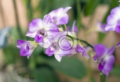 Постер Орхидеи Нежно сиреневая орхидея. (лат. Orchid?ceae Dendrobium )Орхидеи<br>Постер на холсте или бумаге. Любого нужного вам размера. В раме или без. Подвес в комплекте. Трехслойная надежная упаковка. Доставим в любую точку России. Вам осталось только повесить картину на стену!<br>