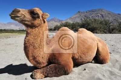 Постер Сирия Верблюды в пустынеСирия<br>Постер на холсте или бумаге. Любого нужного вам размера. В раме или без. Подвес в комплекте. Трехслойная надежная упаковка. Доставим в любую точку России. Вам осталось только повесить картину на стену!<br>