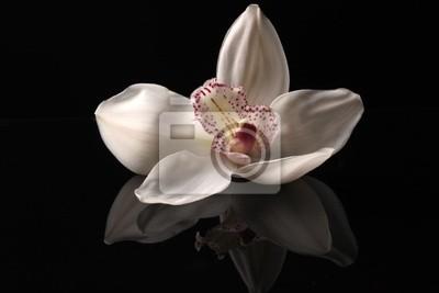 Постер Орхидеи Орхидея на черном фонеОрхидеи<br>Постер на холсте или бумаге. Любого нужного вам размера. В раме или без. Подвес в комплекте. Трехслойная надежная упаковка. Доставим в любую точку России. Вам осталось только повесить картину на стену!<br>