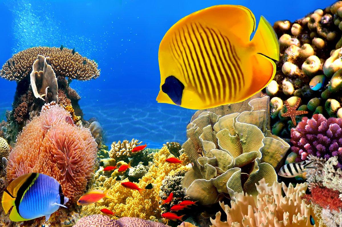 Постер Египет Фото колонии кораллов, Красное Море, ЕгипетЕгипет<br>Постер на холсте или бумаге. Любого нужного вам размера. В раме или без. Подвес в комплекте. Трехслойная надежная упаковка. Доставим в любую точку России. Вам осталось только повесить картину на стену!<br>