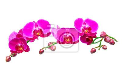 Постер Орхидеи Орхидея Фаленопсис.Орхидеи<br>Постер на холсте или бумаге. Любого нужного вам размера. В раме или без. Подвес в комплекте. Трехслойная надежная упаковка. Доставим в любую точку России. Вам осталось только повесить картину на стену!<br>