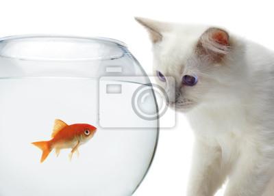 Постер Животные Кот и золотая рыбка, 28x20 см, на бумагеКошки<br>Постер на холсте или бумаге. Любого нужного вам размера. В раме или без. Подвес в комплекте. Трехслойная надежная упаковка. Доставим в любую точку России. Вам осталось только повесить картину на стену!<br>