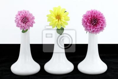 Постер Георгины Белые вазы с георгины цветыГеоргины<br>Постер на холсте или бумаге. Любого нужного вам размера. В раме или без. Подвес в комплекте. Трехслойная надежная упаковка. Доставим в любую точку России. Вам осталось только повесить картину на стену!<br>