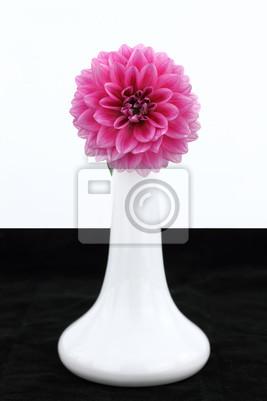 Постер Георгины Белая ваза с цветка георгинаГеоргины<br>Постер на холсте или бумаге. Любого нужного вам размера. В раме или без. Подвес в комплекте. Трехслойная надежная упаковка. Доставим в любую точку России. Вам осталось только повесить картину на стену!<br>