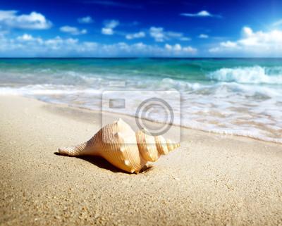 Раковина на пляже (мелкие DOF), 25x20 см, на бумагеРакушки<br>Постер на холсте или бумаге. Любого нужного вам размера. В раме или без. Подвес в комплекте. Трехслойная надежная упаковка. Доставим в любую точку России. Вам осталось только повесить картину на стену!<br>