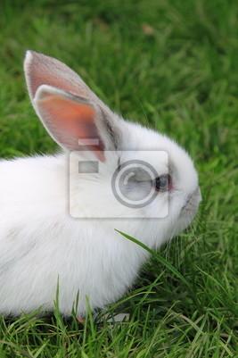 Постер Животные Маленький кролик на зеленом газоне, 20x30 см, на бумагеЗайцы<br>Постер на холсте или бумаге. Любого нужного вам размера. В раме или без. Подвес в комплекте. Трехслойная надежная упаковка. Доставим в любую точку России. Вам осталось только повесить картину на стену!<br>