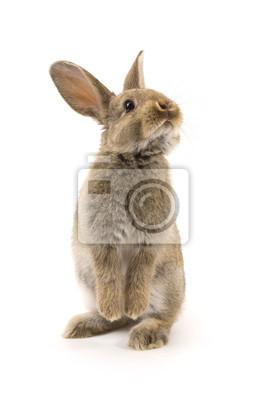 Постер Животные Очаровательны кролик, изолированных на белом, 20x30 см, на бумагеКролики<br>Постер на холсте или бумаге. Любого нужного вам размера. В раме или без. Подвес в комплекте. Трехслойная надежная упаковка. Доставим в любую точку России. Вам осталось только повесить картину на стену!<br>