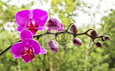Постер Орхидеи Розовые орхидеи на природеОрхидеи<br>Постер на холсте или бумаге. Любого нужного вам размера. В раме или без. Подвес в комплекте. Трехслойная надежная упаковка. Доставим в любую точку России. Вам осталось только повесить картину на стену!<br>