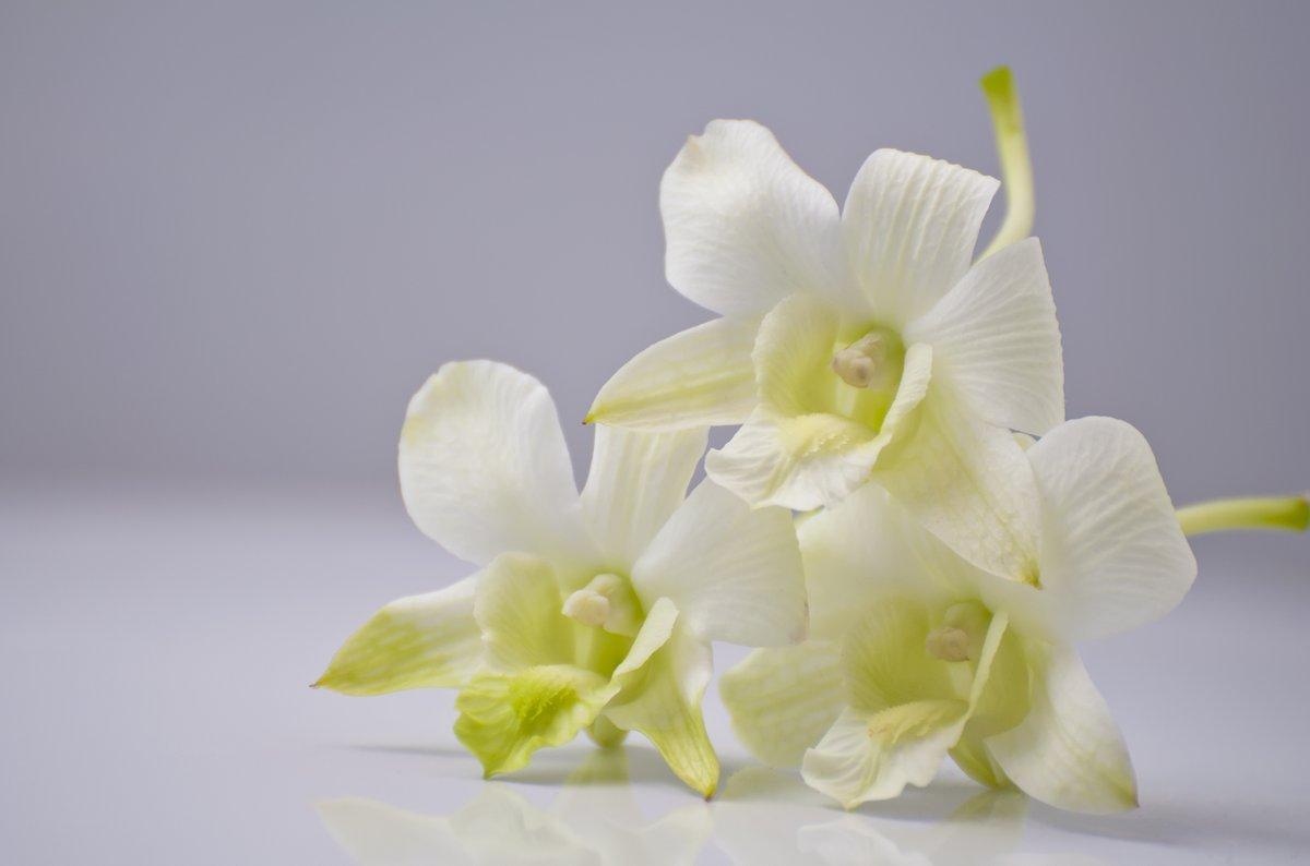 Постер Орхидеи Нежные цветки орхтдеи на светлом фонеОрхидеи<br>Постер на холсте или бумаге. Любого нужного вам размера. В раме или без. Подвес в комплекте. Трехслойная надежная упаковка. Доставим в любую точку России. Вам осталось только повесить картину на стену!<br>