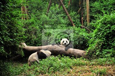 Постер Животные Panda, 30x20 см, на бумагеПанда<br>Постер на холсте или бумаге. Любого нужного вам размера. В раме или без. Подвес в комплекте. Трехслойная надежная упаковка. Доставим в любую точку России. Вам осталось только повесить картину на стену!<br>
