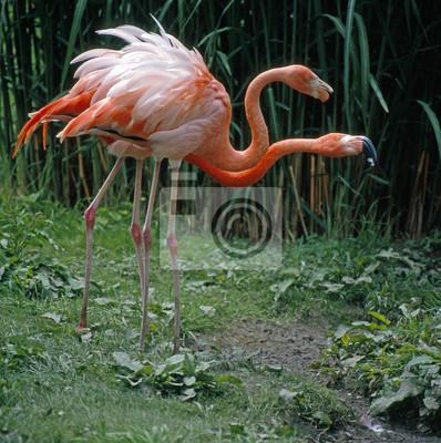 Flamingos_111826, 20x20 см, на бумагеФламинго<br>Постер на холсте или бумаге. Любого нужного вам размера. В раме или без. Подвес в комплекте. Трехслойная надежная упаковка. Доставим в любую точку России. Вам осталось только повесить картину на стену!<br>