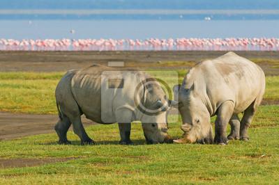 Носороги в озеро Накуру Национальный парк, Кения, 30x20 см, на бумагеНосороги<br>Постер на холсте или бумаге. Любого нужного вам размера. В раме или без. Подвес в комплекте. Трехслойная надежная упаковка. Доставим в любую точку России. Вам осталось только повесить картину на стену!<br>