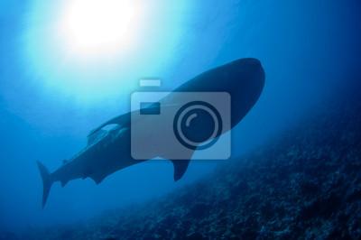 Большую китовую акулу, 30x20 см, на бумагеАкулы<br>Постер на холсте или бумаге. Любого нужного вам размера. В раме или без. Подвес в комплекте. Трехслойная надежная упаковка. Доставим в любую точку России. Вам осталось только повесить картину на стену!<br>
