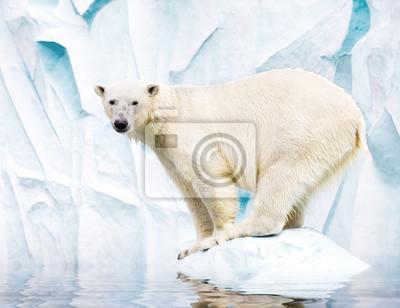 Постер Животные Белый полярный медведь против снег горы, 26x20 см, на бумагеМедведи<br>Постер на холсте или бумаге. Любого нужного вам размера. В раме или без. Подвес в комплекте. Трехслойная надежная упаковка. Доставим в любую точку России. Вам осталось только повесить картину на стену!<br>
