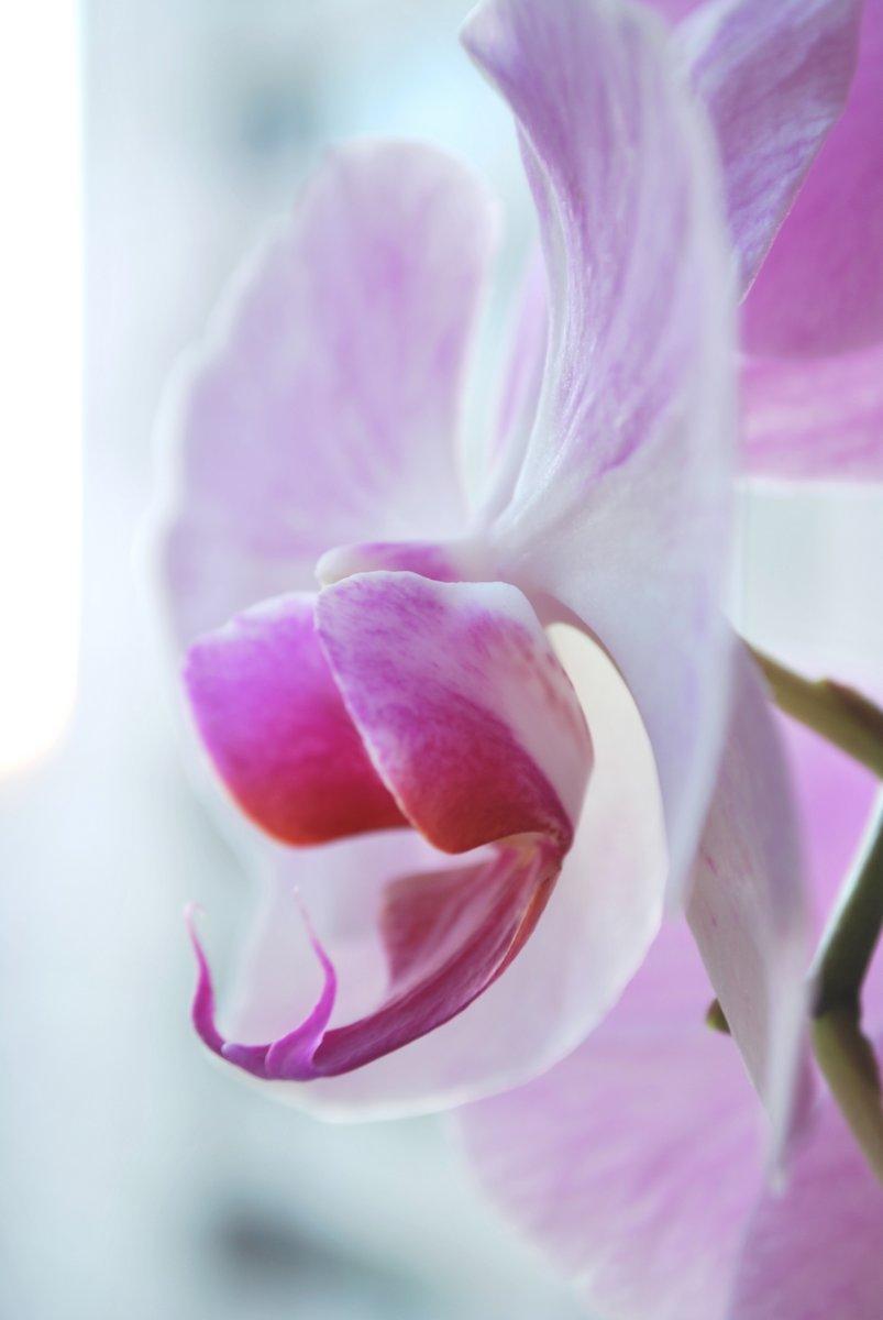 Постер Орхидеи Цветок орхидеиОрхидеи<br>Постер на холсте или бумаге. Любого нужного вам размера. В раме или без. Подвес в комплекте. Трехслойная надежная упаковка. Доставим в любую точку России. Вам осталось только повесить картину на стену!<br>