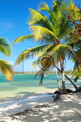 Постер Гавайи Тропический пляж с красивыми пальмамиГавайи<br>Постер на холсте или бумаге. Любого нужного вам размера. В раме или без. Подвес в комплекте. Трехслойная надежная упаковка. Доставим в любую точку России. Вам осталось только повесить картину на стену!<br>