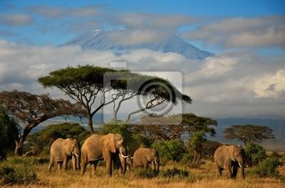 Постер Животные Слон семья перед Mt. Килиманджаро, 30x20 см, на бумагеСлоны<br>Постер на холсте или бумаге. Любого нужного вам размера. В раме или без. Подвес в комплекте. Трехслойная надежная упаковка. Доставим в любую точку России. Вам осталось только повесить картину на стену!<br>