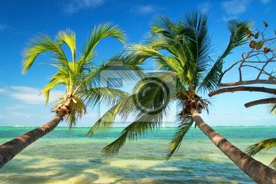 Постер Страны Красивые пальмы на тропическом пляже, 30x20 см, на бумагеГавайи<br>Постер на холсте или бумаге. Любого нужного вам размера. В раме или без. Подвес в комплекте. Трехслойная надежная упаковка. Доставим в любую точку России. Вам осталось только повесить картину на стену!<br>