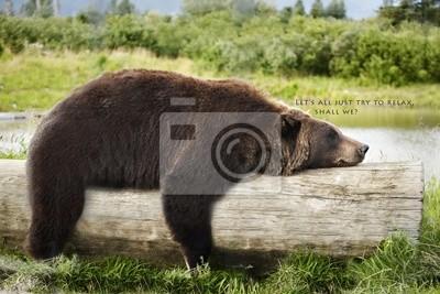 Постер Медведи Медведь Спит на ЖурналМедведи<br>Постер на холсте или бумаге. Любого нужного вам размера. В раме или без. Подвес в комплекте. Трехслойная надежная упаковка. Доставим в любую точку России. Вам осталось только повесить картину на стену!<br>
