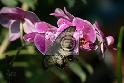Постер Орхидеи Бабочка и орхидеяОрхидеи<br>Постер на холсте или бумаге. Любого нужного вам размера. В раме или без. Подвес в комплекте. Трехслойная надежная упаковка. Доставим в любую точку России. Вам осталось только повесить картину на стену!<br>