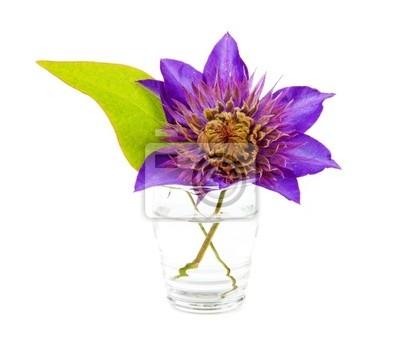 Постер Клематисы Фиолетовый цветок КлематисКлематисы<br>Постер на холсте или бумаге. Любого нужного вам размера. В раме или без. Подвес в комплекте. Трехслойная надежная упаковка. Доставим в любую точку России. Вам осталось только повесить картину на стену!<br>