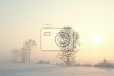 Постер Русская природа Морозная зима дерево в поле, на туманный декабря, утроРусская природа<br>Постер на холсте или бумаге. Любого нужного вам размера. В раме или без. Подвес в комплекте. Трехслойная надежная упаковка. Доставим в любую точку России. Вам осталось только повесить картину на стену!<br>