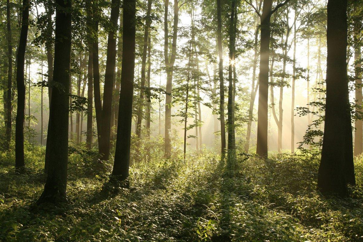 Постер Весна Восходящее солнце входит Мисти лиственные лесаВесна<br>Постер на холсте или бумаге. Любого нужного вам размера. В раме или без. Подвес в комплекте. Трехслойная надежная упаковка. Доставим в любую точку России. Вам осталось только повесить картину на стену!<br>