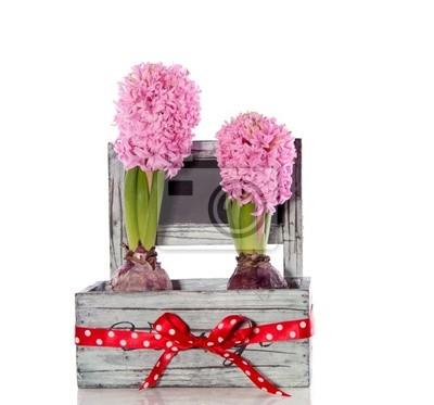 Постер Гиацинты Розовый Гиацинт луковичные цветы в деревянном ящике, украшенном патронажГиацинты<br>Постер на холсте или бумаге. Любого нужного вам размера. В раме или без. Подвес в комплекте. Трехслойная надежная упаковка. Доставим в любую точку России. Вам осталось только повесить картину на стену!<br>