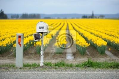 Постер Нарциссы Ящик на желтый, бледно-желтый цветок поле близ СиэтлаНарциссы<br>Постер на холсте или бумаге. Любого нужного вам размера. В раме или без. Подвес в комплекте. Трехслойная надежная упаковка. Доставим в любую точку России. Вам осталось только повесить картину на стену!<br>