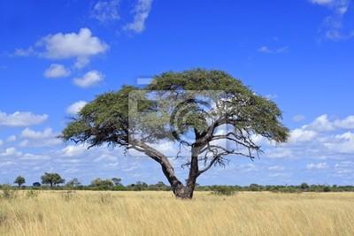 Постер Африканский пейзаж ЗимбабвеАфриканский пейзаж<br>Постер на холсте или бумаге. Любого нужного вам размера. В раме или без. Подвес в комплекте. Трехслойная надежная упаковка. Доставим в любую точку России. Вам осталось только повесить картину на стену!<br>