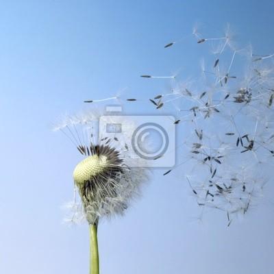 Постер Одуванчики Ветром семена одуванчикаОдуванчики<br>Постер на холсте или бумаге. Любого нужного вам размера. В раме или без. Подвес в комплекте. Трехслойная надежная упаковка. Доставим в любую точку России. Вам осталось только повесить картину на стену!<br>