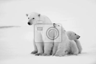 Постер Медведи Полярная Медведица с медвежатами.Медведи<br>Постер на холсте или бумаге. Любого нужного вам размера. В раме или без. Подвес в комплекте. Трехслойная надежная упаковка. Доставим в любую точку России. Вам осталось только повесить картину на стену!<br>