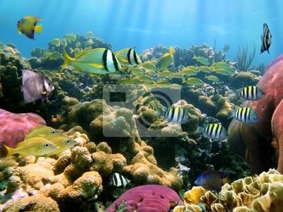 Постер Куба Подводный цвета и светКуба<br>Постер на холсте или бумаге. Любого нужного вам размера. В раме или без. Подвес в комплекте. Трехслойная надежная упаковка. Доставим в любую точку России. Вам осталось только повесить картину на стену!<br>