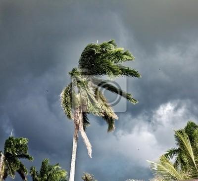Постер Ураган, буря, торнадо PalmУраган, буря, торнадо<br>Постер на холсте или бумаге. Любого нужного вам размера. В раме или без. Подвес в комплекте. Трехслойная надежная упаковка. Доставим в любую точку России. Вам осталось только повесить картину на стену!<br>