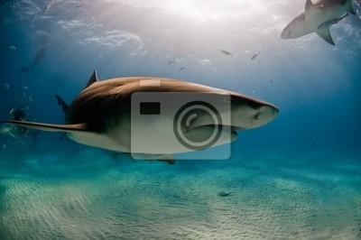 Постер Акулы Мимо акулаАкулы<br>Постер на холсте или бумаге. Любого нужного вам размера. В раме или без. Подвес в комплекте. Трехслойная надежная упаковка. Доставим в любую точку России. Вам осталось только повесить картину на стену!<br>